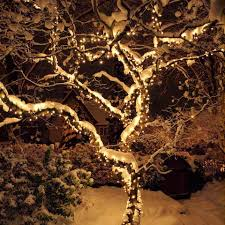 outdoor xmas lighting. Outdoor Tree Lights Outdoor Xmas Lighting I