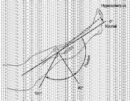 Finger Rom Chart Normal Joint Rom