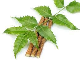 impressive benefits of neem organic facts neem