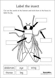 Science Activity – Let's Learn About The Parts of Our Body – FREE in addition Preschool Science Worksheets   Free Printables   Education furthermore Parts of a Tree Worksheet   Trees School Theme   Pinterest likewise Plant kingdom  science for kids games   worksheets together with Free Parts of an Apple Activity Worksheets  This set includes likewise 16 best Body Worksheets images on Pinterest   Worksheets  Body further Bird Science with Movement Activities and Literacy   Bird Unit moreover  in addition  likewise  additionally Children can label the parts of a plant  from Super Teacher. on preschool worksheets parts science