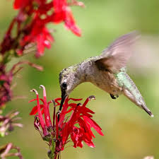 how to attract hummingbirds and erflies to your garden the handyman s daughter