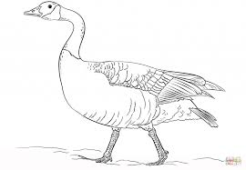 Coloring Pages Bird Coloring Pages Free Printable Realistic Canada