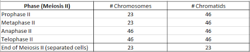 Cell Division   7 Red Team additionally Number Of Chromosomes Worksheet   Switchconf besides Chromosome worksheet   homologous chromosome pairs in diploid additionally Counting Chromosomes in addition Chromosome Analysis besides Mitosis  Meiosis and Fertilization 1   PDF besides Number Of Chromosomes Worksheet Answers Awesome Number Chromosomes also Number Of Chromosomes Worksheet Answers New Mitosis Vs Meiosis also Chromosomes Worksheet Worksheets furthermore Doc 180448 further . on number of chromosomes worksheet answers