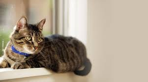cats in animal shelters. Plain Shelters Cat Lying On A Window Sill And Cats In Animal Shelters