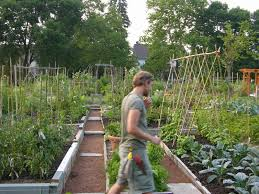 finished student garden at longwood gardens 2006