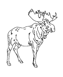 Small Picture Moose Animal Coloring Pages Gianfredanet