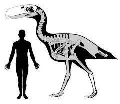 Absurd Creature of the Week: The Murderous 10-Foot-Tall Bird With a Beak  Like a Pickax | WIRED