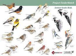 Backyard Ideas On A Budget Birdsleuth Resources Cornell