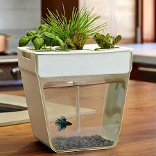 you want to keep an umbra fishhotel in your work desk but the idea of having to clean it regularly and you like the idea of plants too