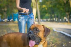 boxer dog muzzles uk online from the producer boxer dogs have very strong nervous system complaisant character and lively temperament boxers treat all the family members very well contacts them