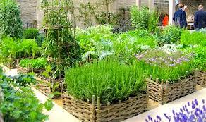 Having fresh herbs on hand