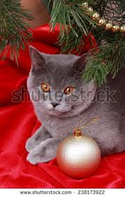 24 Best Cat Proofing The Christmas Tree Images On Pinterest Cat Themed Christmas Tree