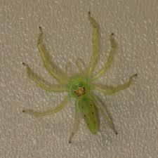 Spiders In Florida Species Pictures