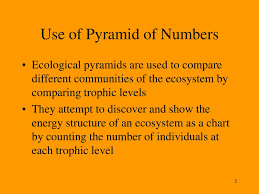 Ecosystem Pyramid Chart H Pyramid Of Numbers Extended Study Ppt Download