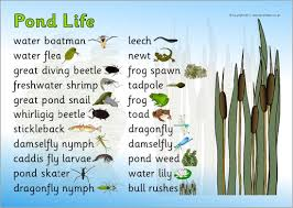 Pond Life Word Mat Sb4518 Sparklebox Pond Life Pond