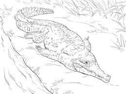 Small Picture Orinoco Crocodile coloring page Free Printable Coloring Pages