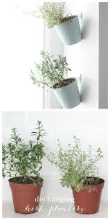 Hanging Herb Garden Kitchen 17 Best Ideas About Hanging Herbs On Pinterest Indoor Wall