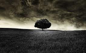 Black Trees HD Desktop Wallpapers on ...