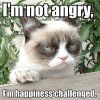 Grumpy Cat on Pinterest | Angry Cat, Grumpy Kitty and Grumpy Cat ... via Relatably.com