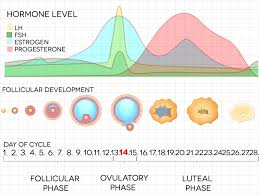 Women S Hormone Levels Chart Hormone Levels Change Throughout The Month