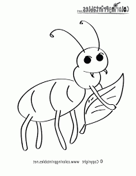 insect coloring pages preschool free printable nature coloring pages rainforest flowers insects
