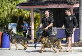 Ryan Lennox and Mark Pini | Military dogs, Working dogs, German shepherd