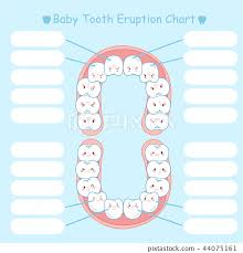 Baby Tooth Eruption Chart Stock Illustration 44075161