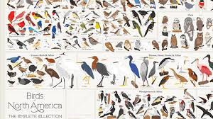 Cockatiel Chart Every Bird Species In North America In A Single Poster