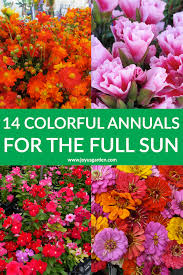 a collage with sulfur cosmos etia annual vinca zinnias the text reads 14 colorful summer