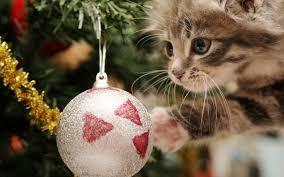 Les beaux sapins de Noël Images?q=tbn:ANd9GcSNPplGs-B-oAk-zcjMGBxGAvc1I3wCmrGYxppYZjUQ0ce8psQ9kg