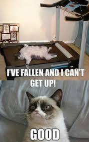 Grumpy Cat Christmas Memes on Pinterest   Life Alert, Grumpy Cat ... via Relatably.com
