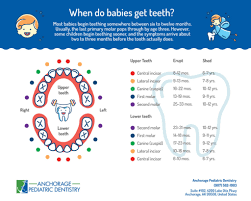 Teething Chart Babies Printable Baby Teething Chart 6 12 Months Until 3 Years Old
