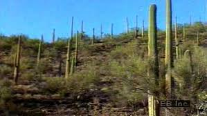 Sonoran Desert Map Plants Animals Facts Britannica