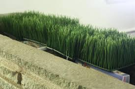 image of faux grass decor ideas fake wall art decorative grasses for your lovely garden outdoor decor with artificial grass