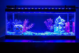 led aquarium light blue white variable salt fresh