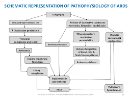 Ards Pathophysiology Flow Chart Ards Ppt