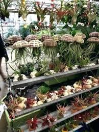 garden centers in ma. Wonderful Garden Mahoneys Garden Center Centers St Ma  Hours With Garden Centers In Ma N