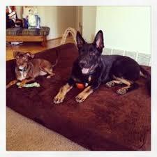 big barker dog beds. Modren Barker Big Barker 7 Inside Dog Beds R