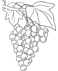 Small Picture Grapes Coloring Pages for Kids Color Luna