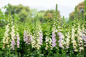 top 10 cottage garden favourites the