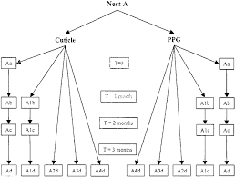 Ppg Organizational Chart Flow Chart Showing The Procedures Of Nest Separation And