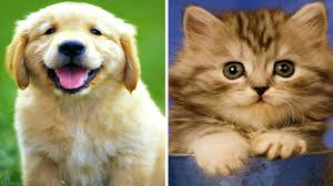 cute puppies and kittens. Brilliant Puppies On Cute Puppies And Kittens P