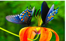 48+] Colorful Butterfly Wallpaper on ...