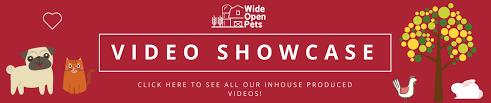 soundcloud image size forest trees soundcloud banner wide open pets