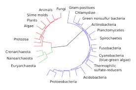 Bacteria Classification Classification Of Microorganisms Boundless Microbiology