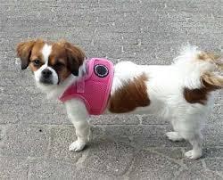 Puppia Soft Dog Harness Sizing Chart Puppia Vivien Harness Puppia Vivien Harness In Dubai The