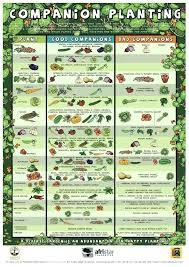 Vegetable Garden Fertilizer Chart Vegetable Garden Fertilizer Durbantainment Info