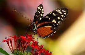 Motýl Význam Tetování Potetovatcz