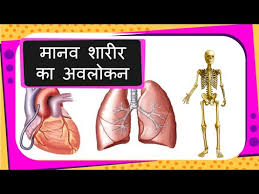 Human Body Parts Chart In English Science Human Body Parts And Organs Introduction For Children Hindi
