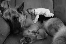 10 incantevoli immagini di cani, gatti e bambini (FOTO) | Tutto Zampe